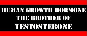 hgh the brother of testosterone